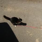 【慢性腎不全の猫】ごんぼさんの日光浴で太陽のめぐみ♪