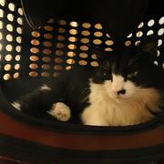 冷たい猫鍋でくつろぐごんぼさん