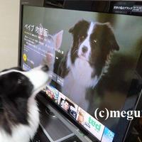 TVの中に居るのはムギのママ?