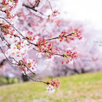 桜咲く頃に・・~restart~