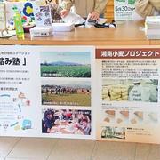 「湘南小麦の麦刈り体験会」に参加して来ました♪