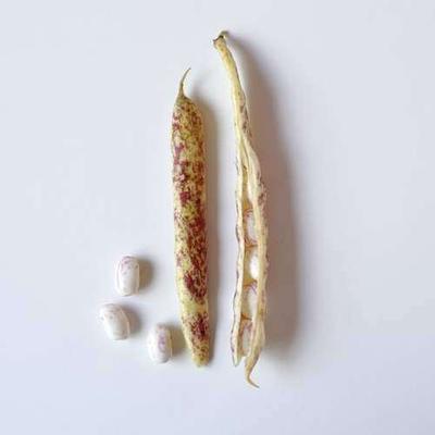 沖縄には生のうずら豆が売ってます!→塩ゆでうずら豆