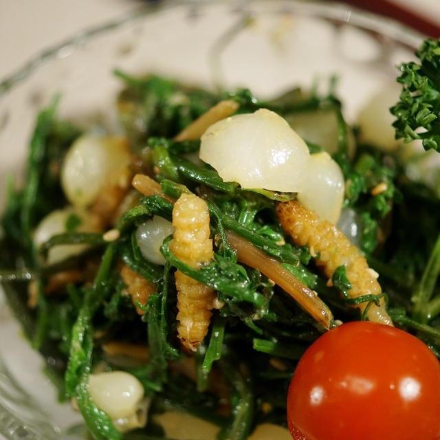 【今が旬!!野草三つ巴の絶品おつまみ ノビル+セリ+ツクシの辛子酢味噌和え】