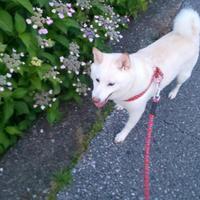 初夏のお散歩
