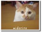 midoさん