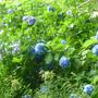 夏越しの祓えの『お豆のチカラ』