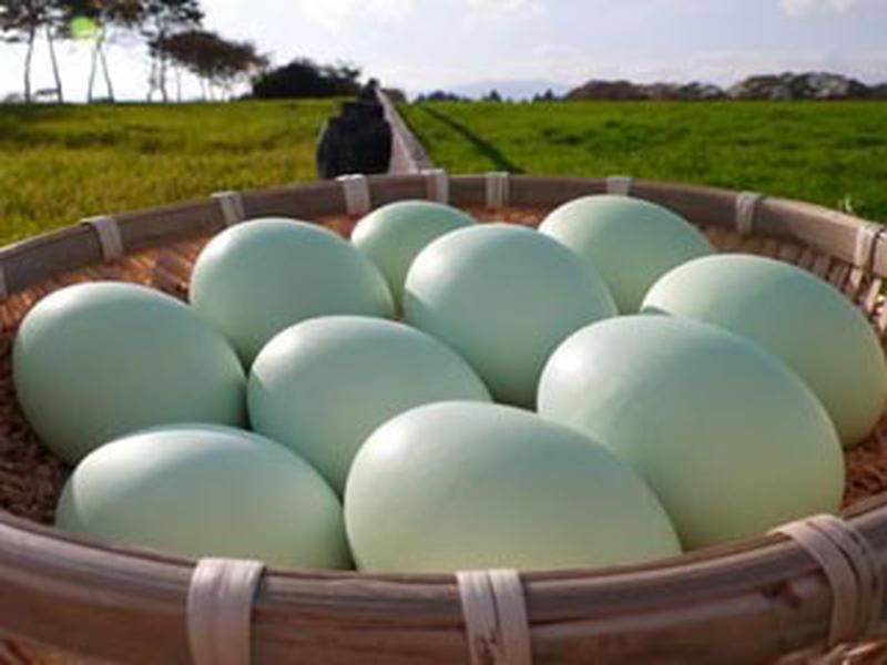 通常より大きな黄身は、新鮮で濃厚!生みたてが届くので、まずは、卵かけごはんで味わうのがおすすめ。卵本...