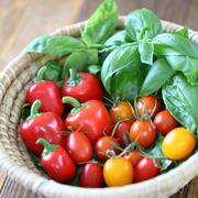 ■我が家の夏のベランダ菜園収穫♪ と、ナンとふわふわパン♡