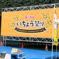神宮外苑 いちょう祭り!
