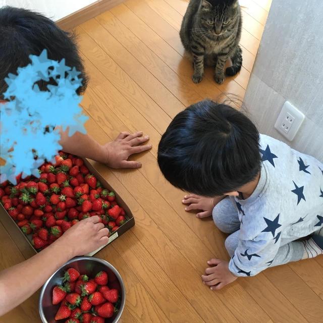 【いちご】甘い香り♡いちごのコンポート&いちご氷ミルク