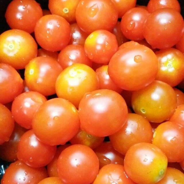 プチトマトからトマトソース