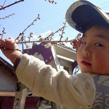 梅の花の息子