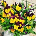 季節の花✿季節の用品✿モノについてひとり反省会
