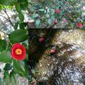 藪椿で花遊び