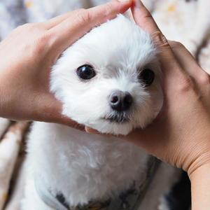 コウタ& Ryo夫婦+愛犬シュワ♂の2人と一匹暮らし。こう見えてまだ結婚4年目。<br><br>Ry...