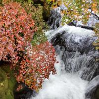 群馬→栃木 紅葉狩りドライブ 竜頭の滝は見頃