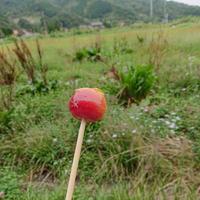 *リンゴ狩りと手作りリンゴ飴*