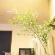 キッチンカウンターに枝ものグリーンを。