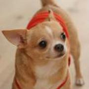 還暦フィーバー第2弾は 幼なじみムラチンの犬友の超ステキなお宅で 伝説のシェフ高階氏による...