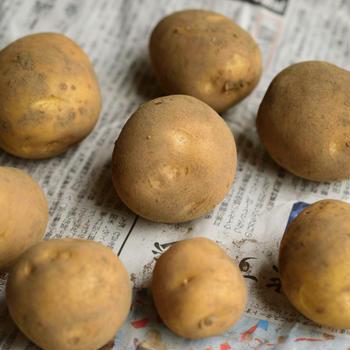 Potato mixed with Pesto Giapponese 新じゃがの和風ペスト和え