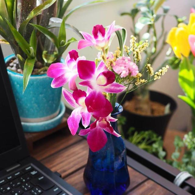 おうち時間を盛り上げる!お花の定期便