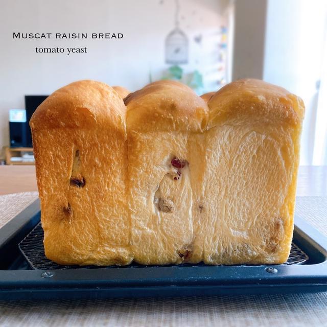 レーズン食パン(トマト酵母・ポーリッシュ法の続き…)