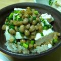 北海道産だいず100% 「納豆+豆腐 ごはん」 by コットンさん