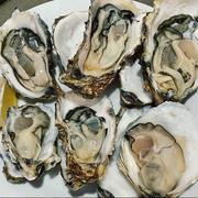 「ミトラタカセ」で牡蠣づくし!生牡蠣6種食べ比べ・カキフライ・お鍋も❗️参宮橋駅歩 20秒❗️