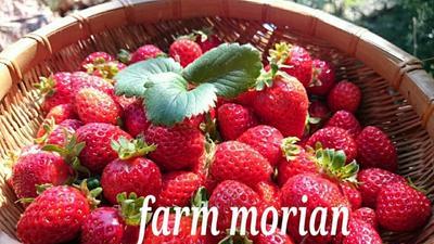 農家レシピ・いちごジャムつくろ♪3月の教室