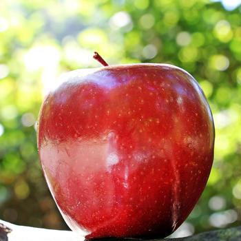 「リンゴ」の詩でご挨拶。皆様、良いお年を。