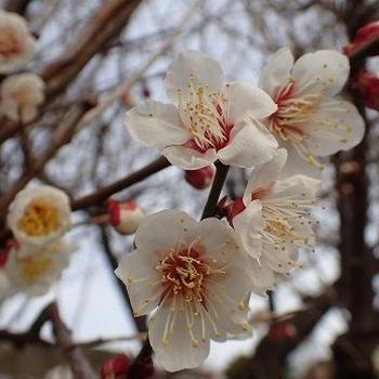 春ジャガイモ☆週末菜園(2月中旬)