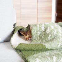 毛布もぐりプロのちび子、毎日技を見せてくれる♪