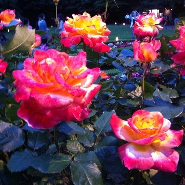 バラの庭園