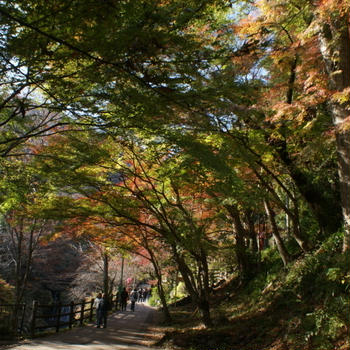 今年の紅葉は奈良&養老 その3