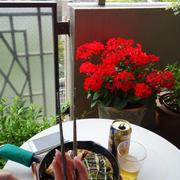 美味しいお好み焼きは神戸っ子のプライド!!?