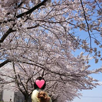 散歩~桜並木を歩く!~