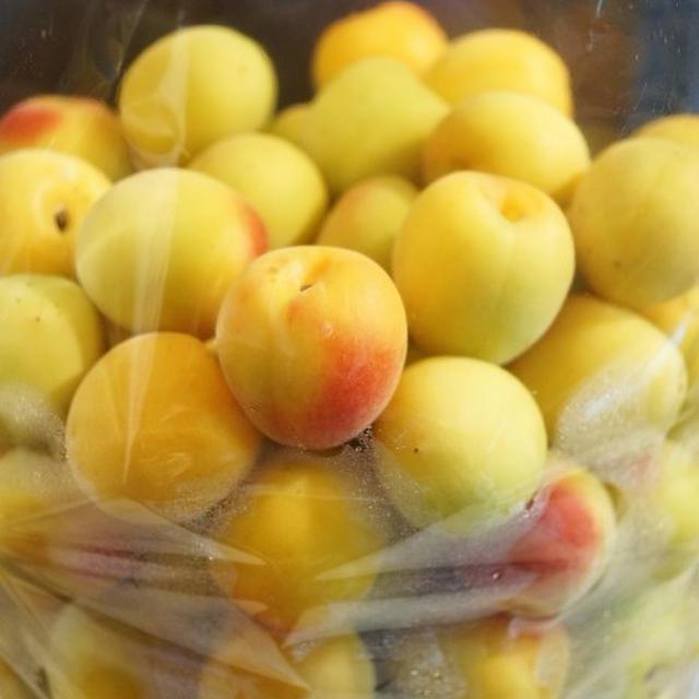 ■自家製保存食・梅仕事【今年も南高梅で 梅干しを漬けました♪】