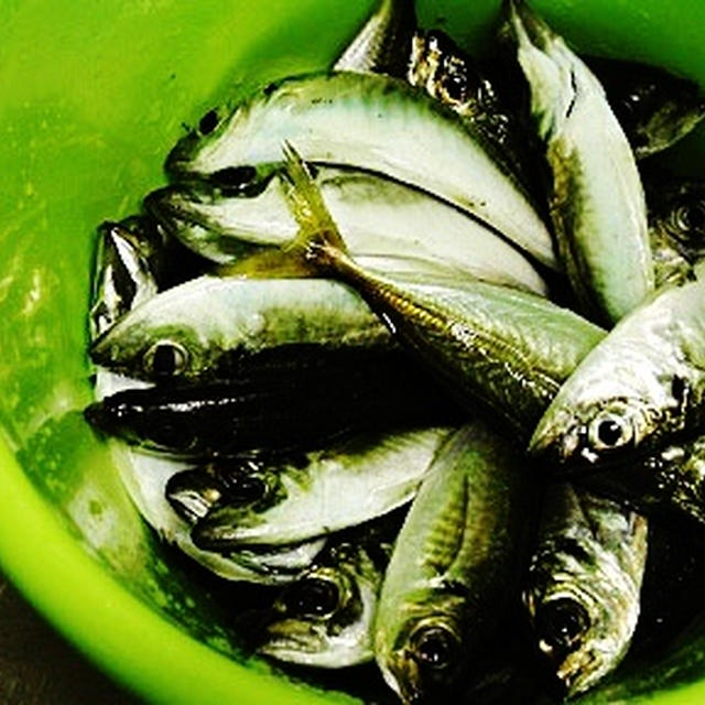 釣った魚deうちごはん。