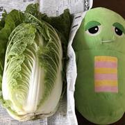 【簡単!!大根&白菜】白菜のゴマツナサラダと、大根と鮭の味噌汁と、ESSE新年号のお知らせ
