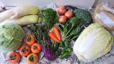 白菜丸ごと収納術・作り置き・大量消費