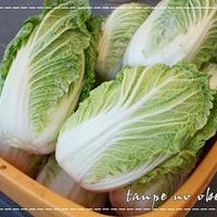 【モニター♪HAPPYハンバーグレシピコンテスト】ロール白菜