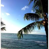 ハワイ帰国日