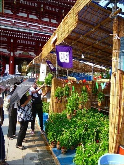 浅草寺のほおずき市へ行ってきました♪