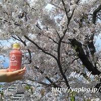 Doleスムージ(BERRY BLEND)とCherry blossoms