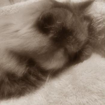 飼い猫が永眠