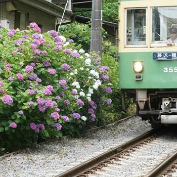 とく散歩17(鎌倉~江ノ島 No.3)