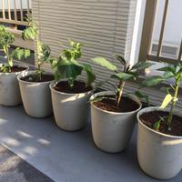 野菜の苗を植えました!