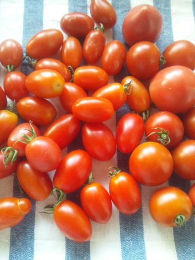 手作りのトマトソース
