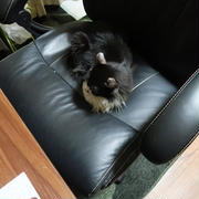 椅子を独占するごんぼさん