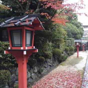 京の紅葉情報 Vol.2